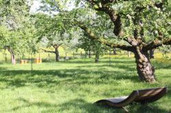 Bild Obstbaumschnitt
